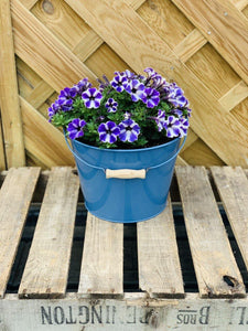 Small Blue Zinc Bucket Filled with Petunia- 25cm