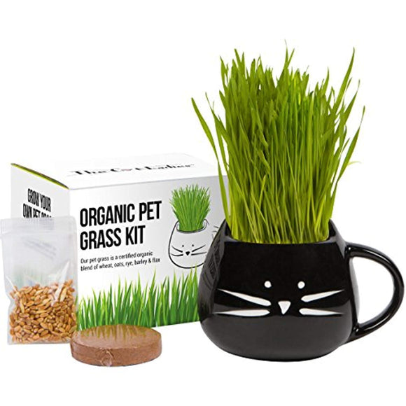 Cat Grass Growing Kit with Organic Seed Mix, Organic Soil and Cat Planter