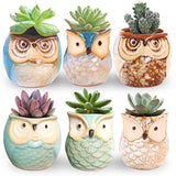 ROSE CREATE 6 Pcs 2.5 Inches Owl Pots
