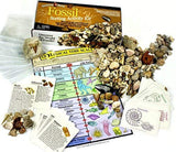 Dancing Bear Fossil Collection Sorting Activity Kit with Over 100 Pcs