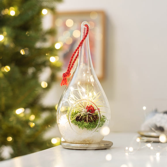Merry and Bright 2-pack Terrariums