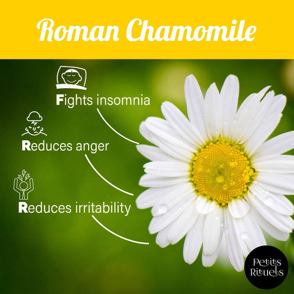 Roman Chamomile essential oil benefits.