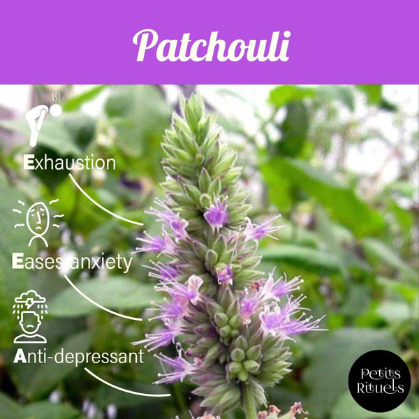 Emotional benefits of patchouli essential oil.