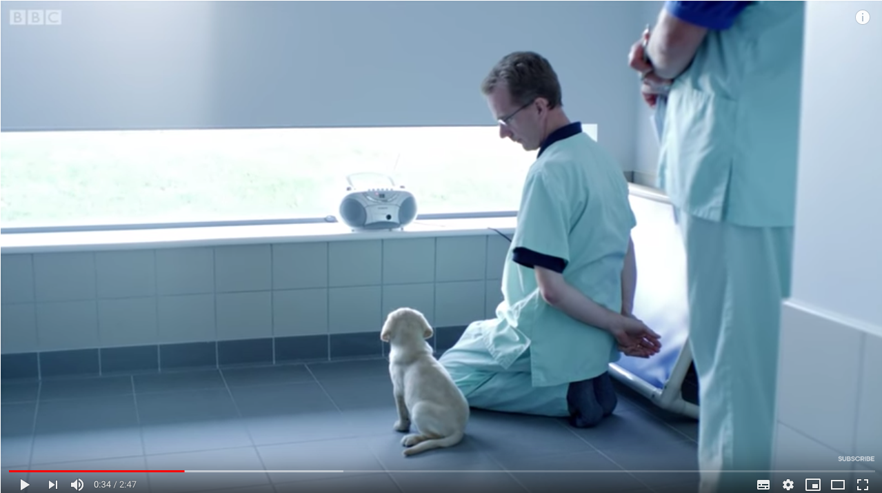 This Super Cute Guide Dog Puppy Is Probably Right Pawed