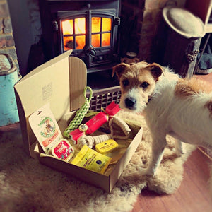 HOUNDBOX Christmas Gift Box For Dogs • FREE UK Delivery - HOUNDWORTHY