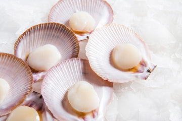 SEAFOOD - SCALLOP - HALF SHELL - 12PCS