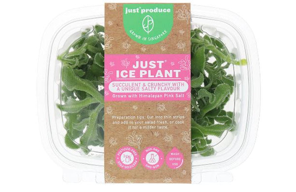 SALAD - JUST ICE PLANTS - 50GMS