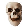 Skull Ashtray - Slimjim Online