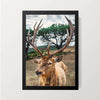 """Deer Antlers"" Wall Decor"
