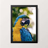 """The Parakeet"" Wall Decor"