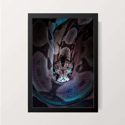 """The Sidewinder"" Wall Decor"