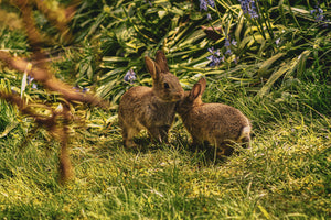 Some Bunny to Love - Jake Janes Photography