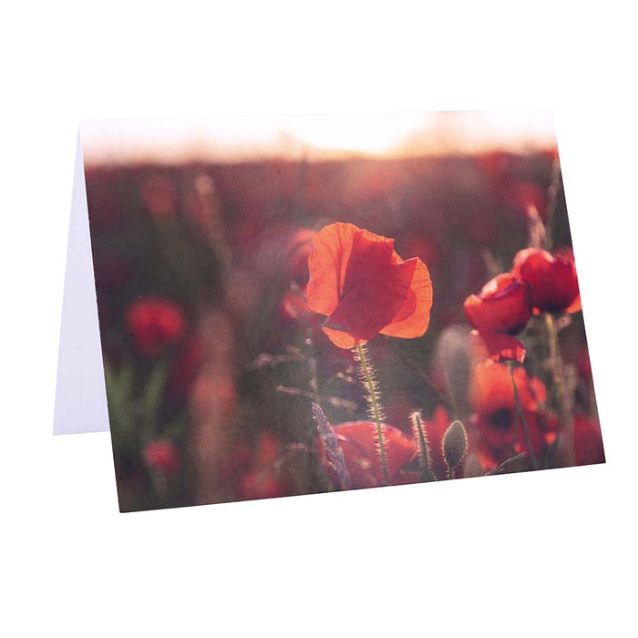 Poppy Field Note Cards