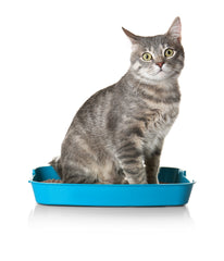 Get Rid of litter box smell