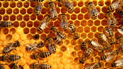 Honey bees producing honey and beeswax in their hive