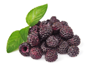 Berrihealth Black Raspberry Powder