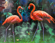 Nature Flamingos