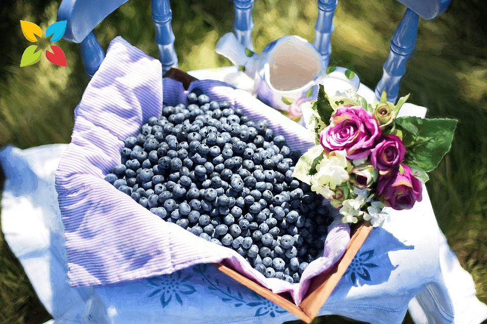 Basket Blueberries Fresh Fruit Berries
