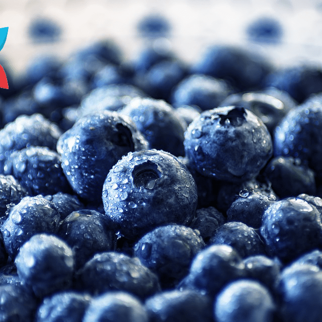 Fresh Blueberries Polyphenols