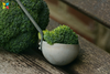 Compound Found In Cruciferous Vegetables May Help Improve Working Memory