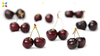 Tart Cherry Supplementation May Help Muscle Recovery