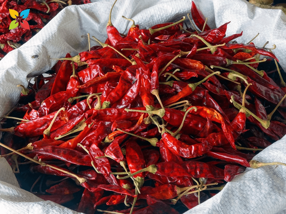 Red Chili Peppers Longer Life Capsaicin Health Benefits