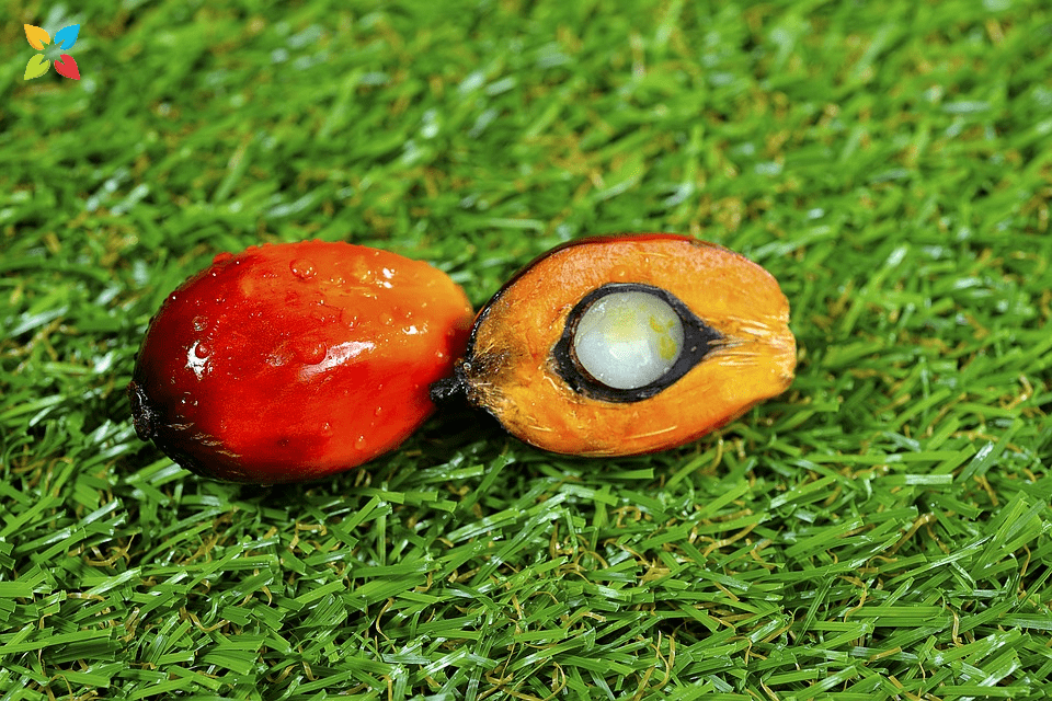 Upclose Picture of Red Palm Fruit Cut in Half