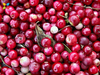 Dried Cranberry Powder May Help Reduce Overactive Bladder Symptoms