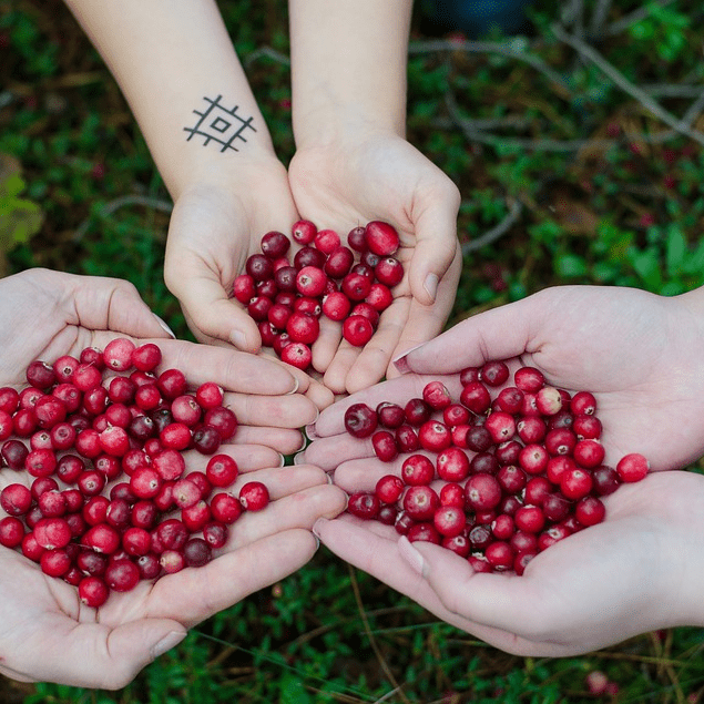 Hands Holding Cranberries Tattoos Health Benefits Anthocyanins Heart