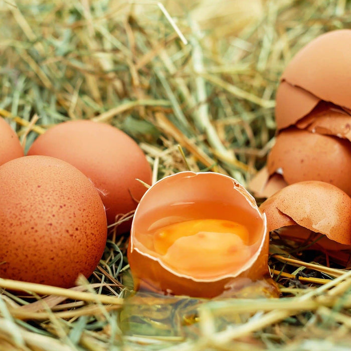 Moderate Consumption of Eggs Not Associated With Increased Risk of Cardiosvacular Events