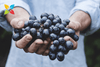 Study Finds Polyphenols May Help Improve Cognitive Function