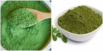 A side-by-side image of different shades of moringa powder