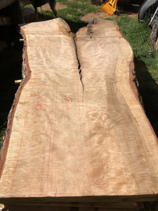 Live Edge Slabs. Curly Silver Maple.