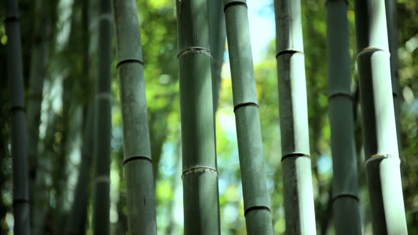What makes Bamboo special?