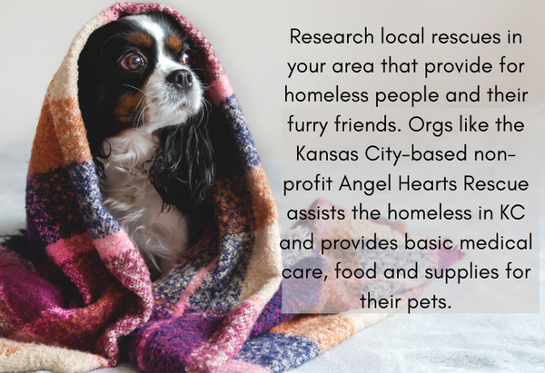 Angel Hearts pet rescue information