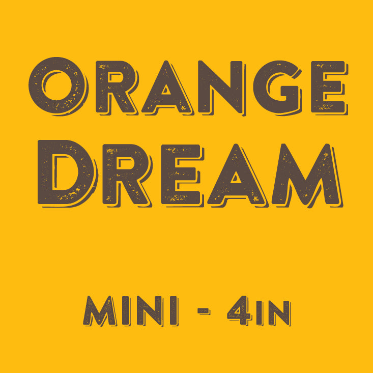Orange Dream - Mini