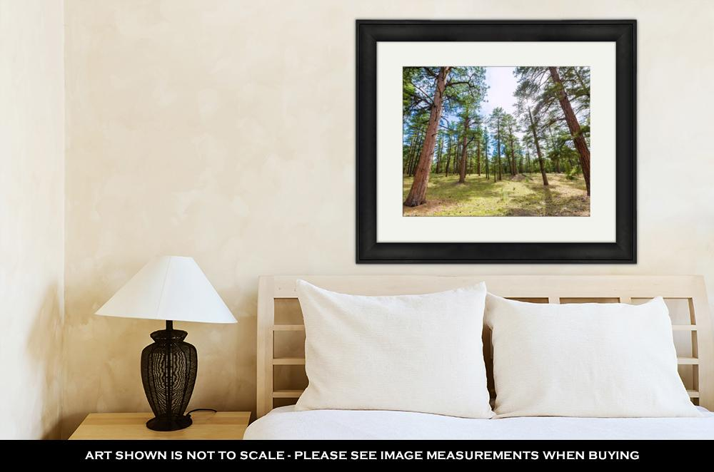Framed Print, Pine Tree Forest In Grand Canyon Arizona