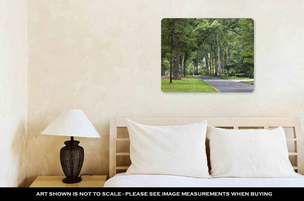 Metal Panel Print, Queens Road West In Myers Park In The Summer With Tall Willow Oaks