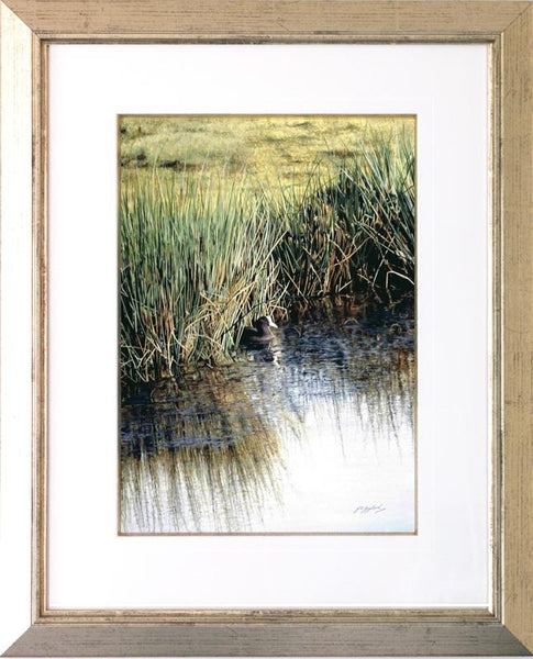 A New Day Coot bird painting acrylic framed animal artist J. Gaylard