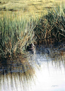 A New Day Coot bird painting acrylic landscape painting animal artist J. Gaylard