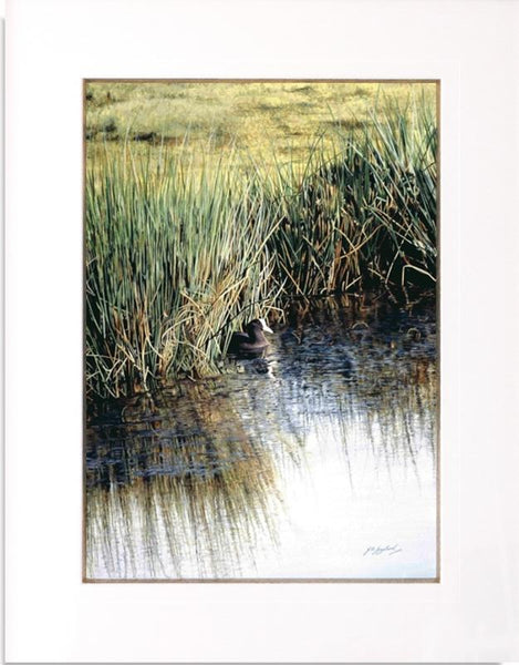 A New Day Coot bird painting mounted animal artist J. Gaylard