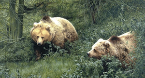 Approaching European Brown Bears wildlife art print animal art artist Jacqueline Gaylard