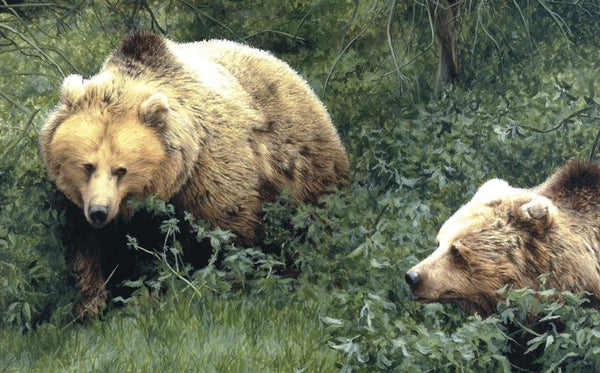Approaching European Brown Bears wildlife art print detail animal art artist J. Gaylard