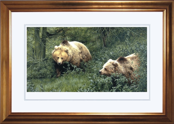 Approaching European Brown Bears wildlife art print framed animal art artist J. Gaylard