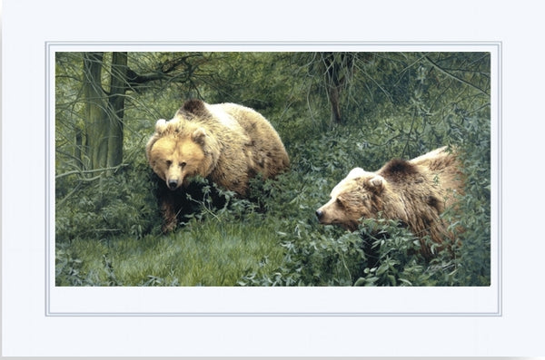 Approaching European Brown Bears wildlife art print mounted animal art artist J. Gaylard