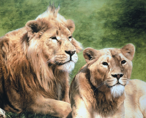 Asiatic lion with lioness wildlife art print animal large wall art detail artist J. Gaylard.