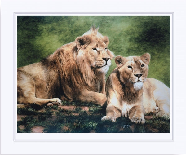 Asiatic lion with lioness wildlife art print big cat wall art artist J. Gaylard.