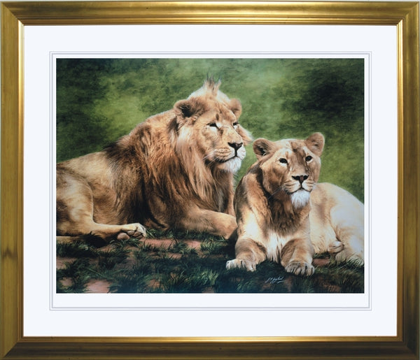 Asiatic lion with lioness wildlife art print framed animal large wall art artist J. Gaylard.