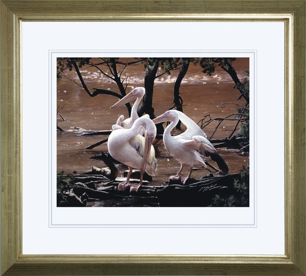At the Water's Edge white pelican birds wildlife art print framed animal art artist J. Gaylard