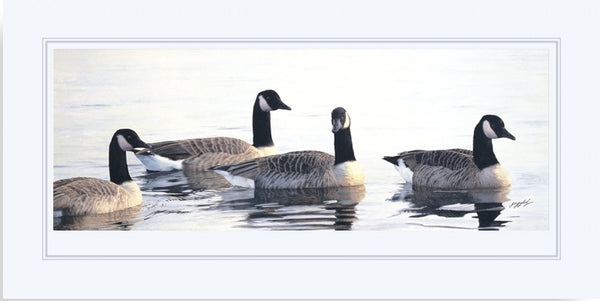 Canada geese birds wildlife art print mounted animal art artist Jacqueline Gaylard